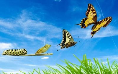 Nuove e vigorose ali per Volare