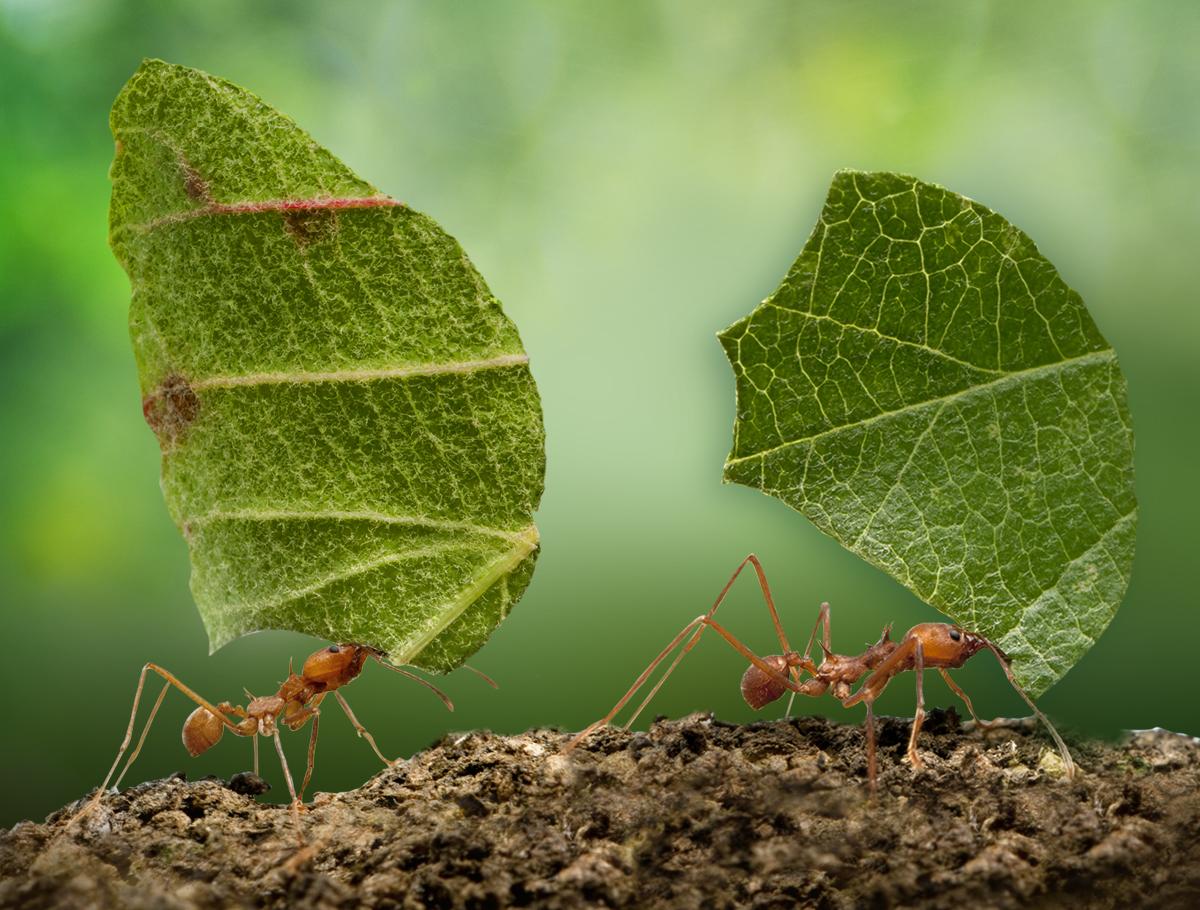 Quando le formiche sono troppe!