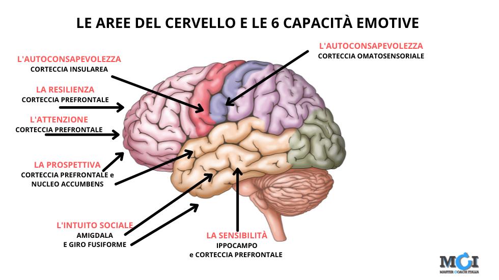 """""""Chi siamo""""? La mappa emotiva cerebrale"""